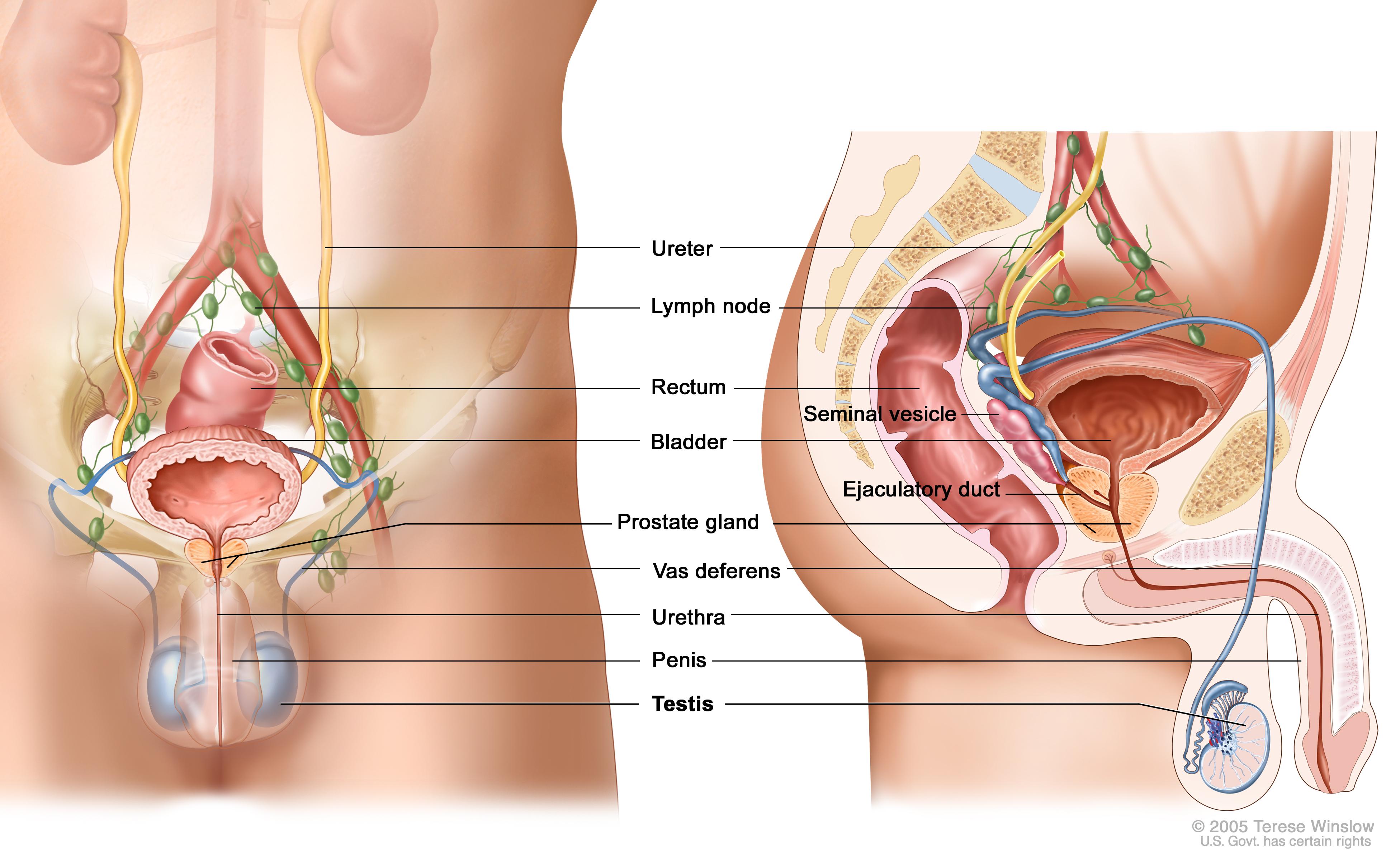 Testicular Cancer Treatment (PDQ®) (Patients) - Siteman Cancer Center