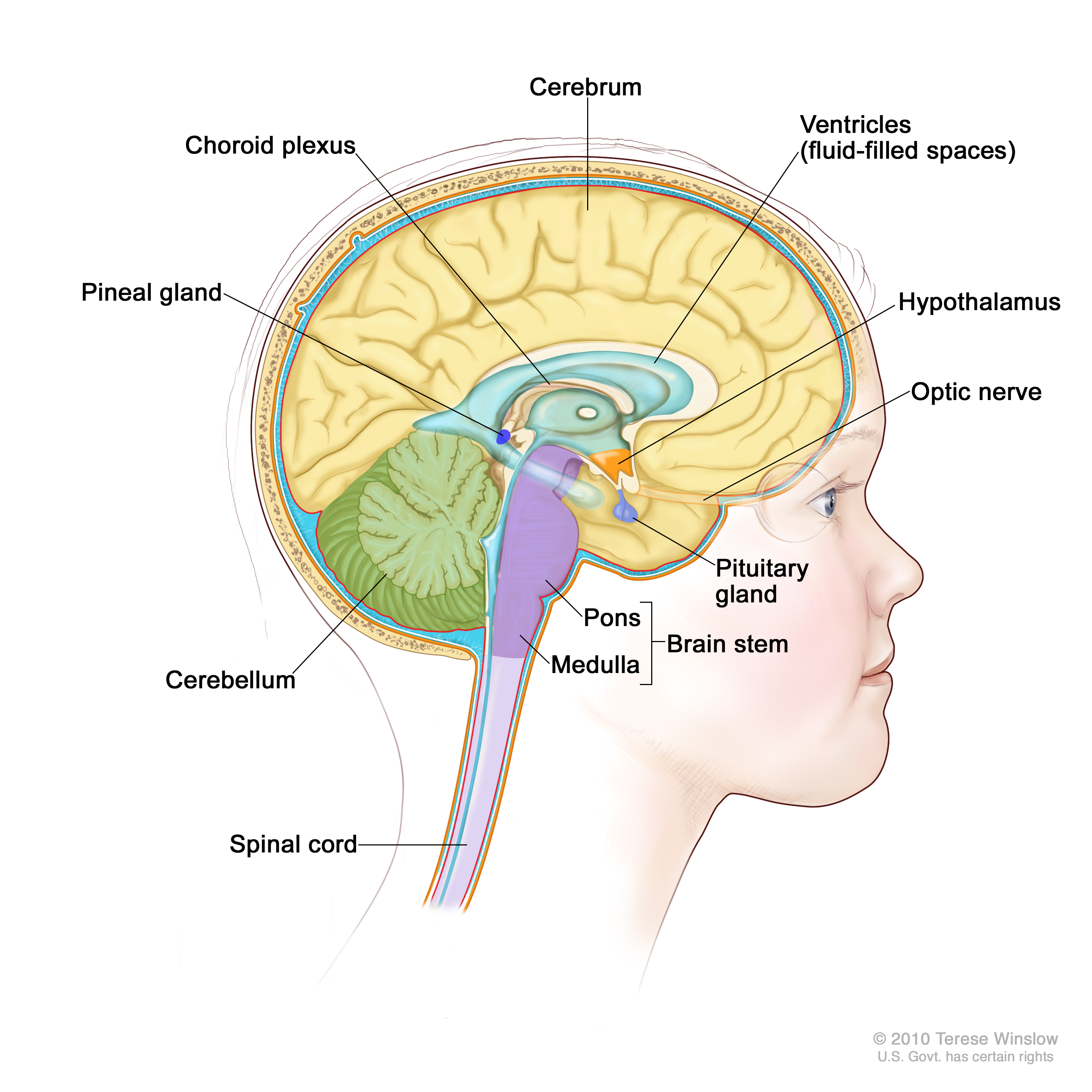 Childhood Central Nervous System Embryonal Tumors Treatment Pdq