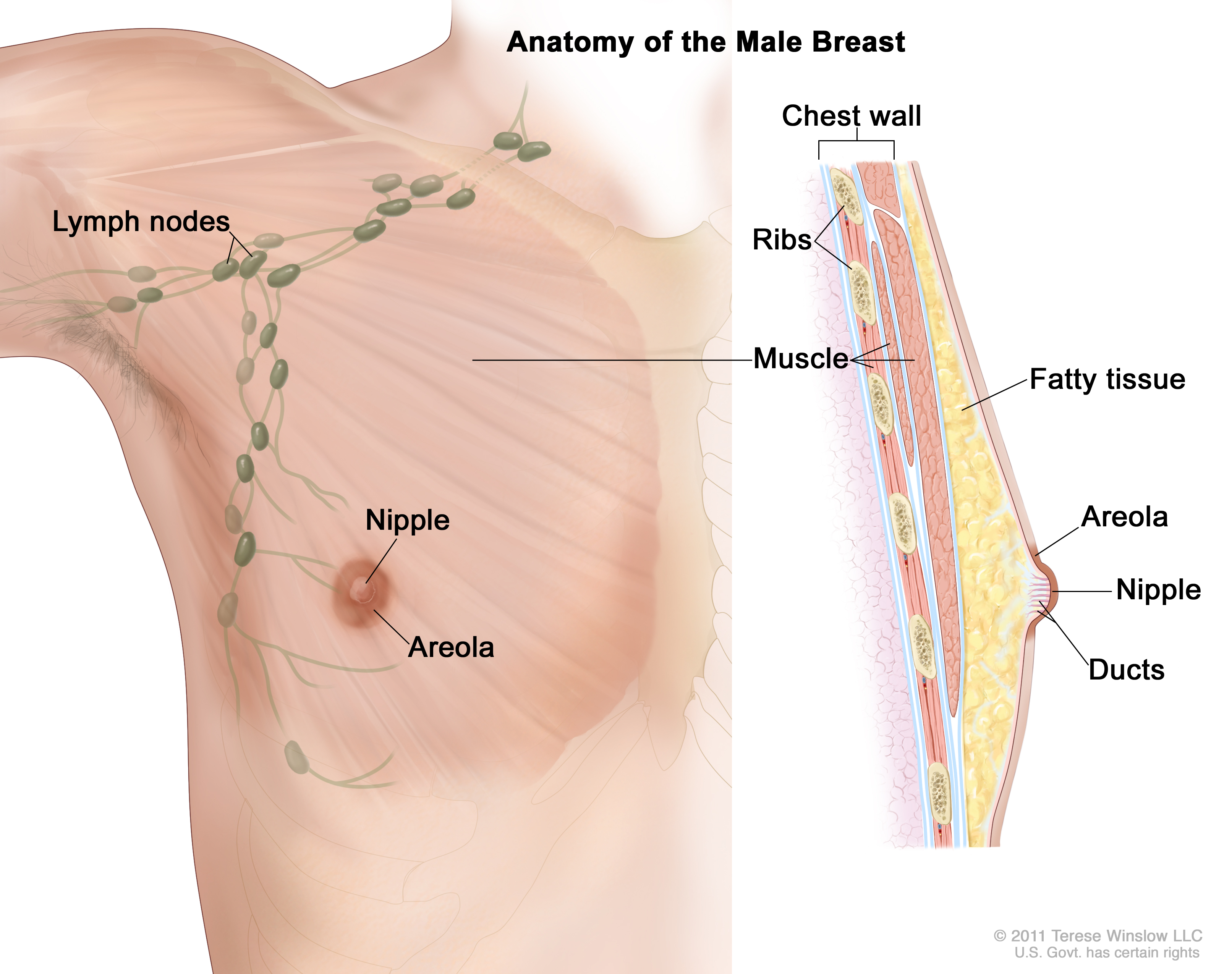 areola (Patient) - Siteman Cancer Center