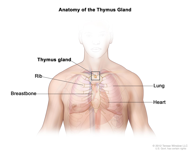 Thymus Patient Siteman Cancer Center