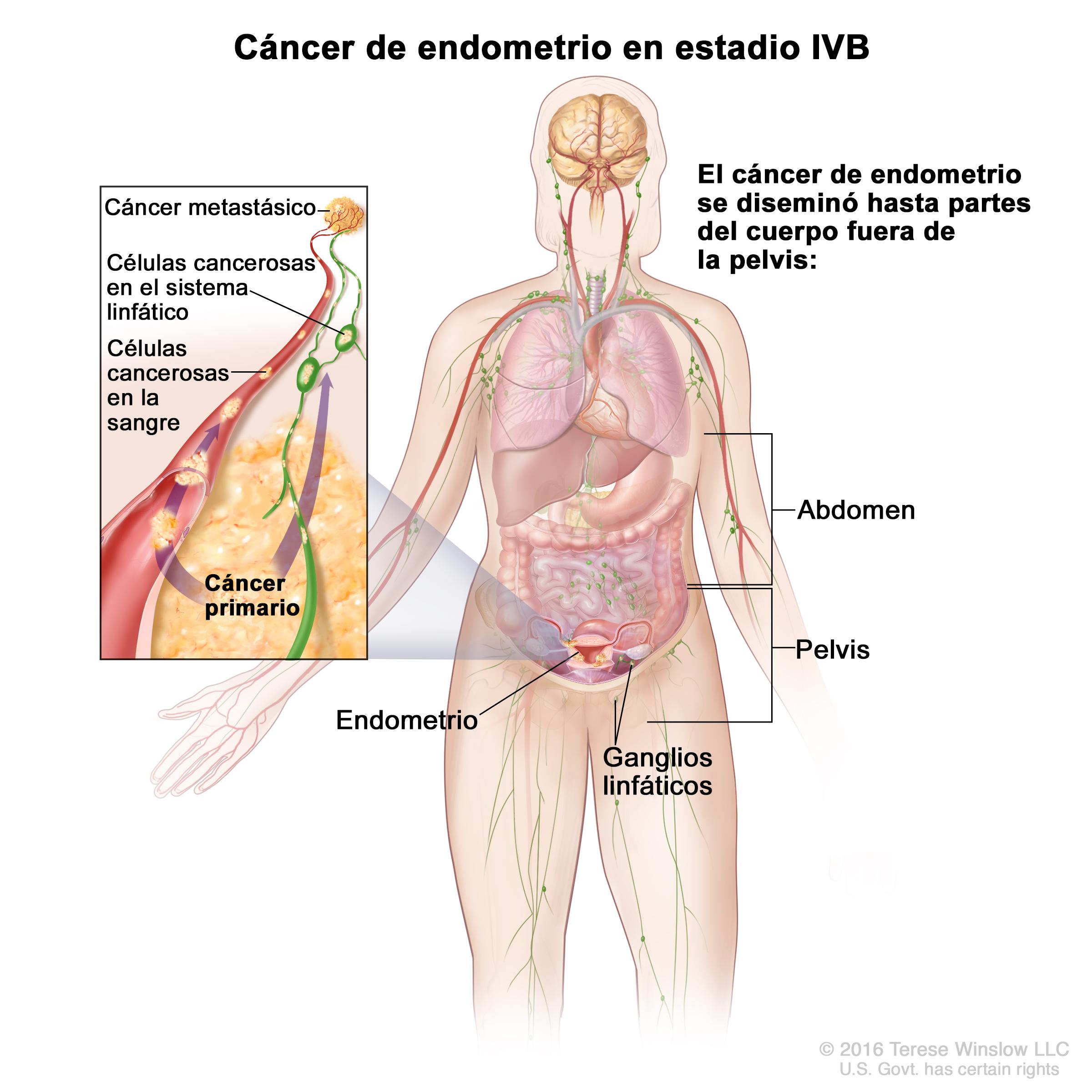 Dorable Mcgraw Conectar Colina Anatomía Y Fisiología Elaboración ...