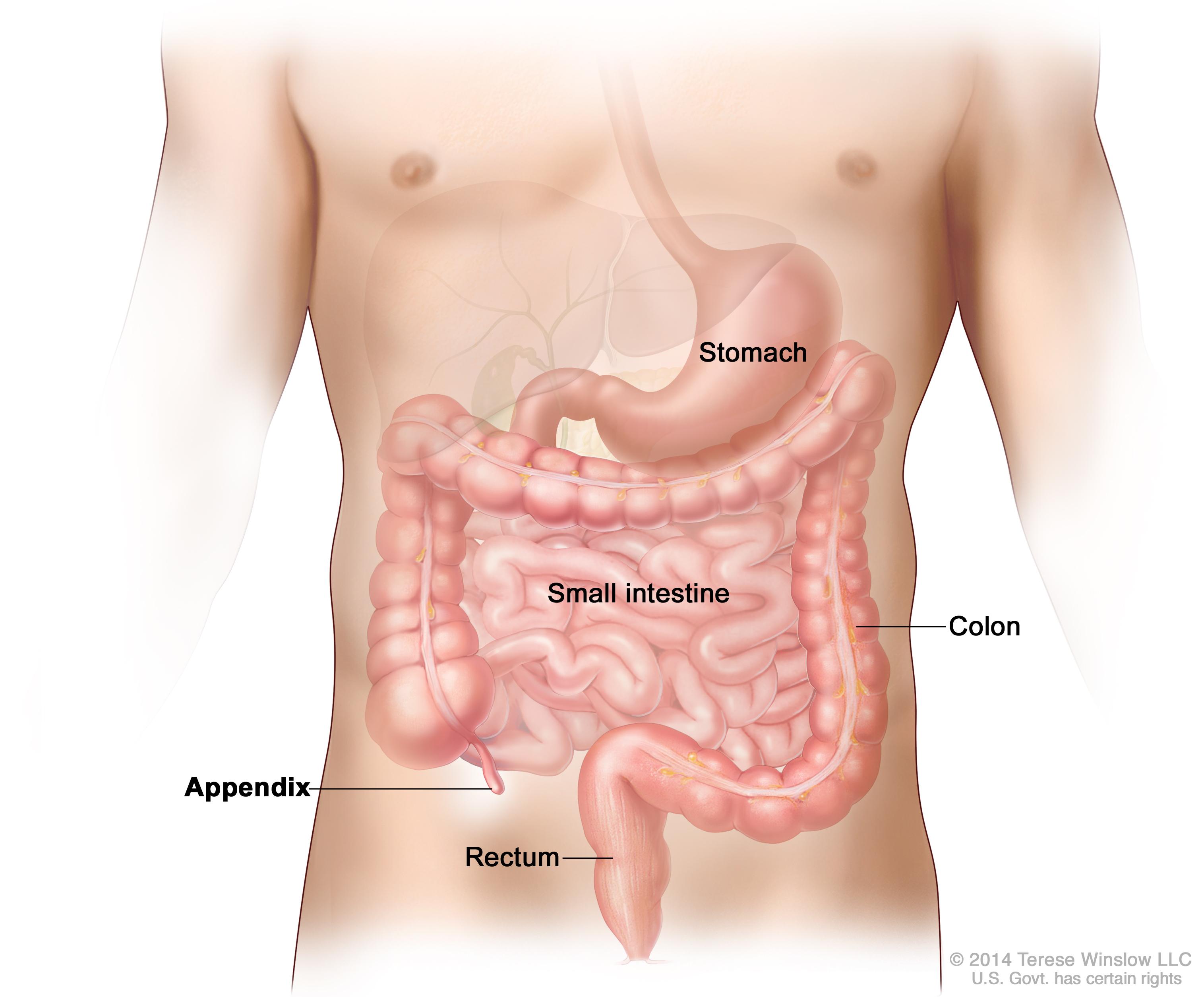 Appendix Patient Siteman Cancer Center