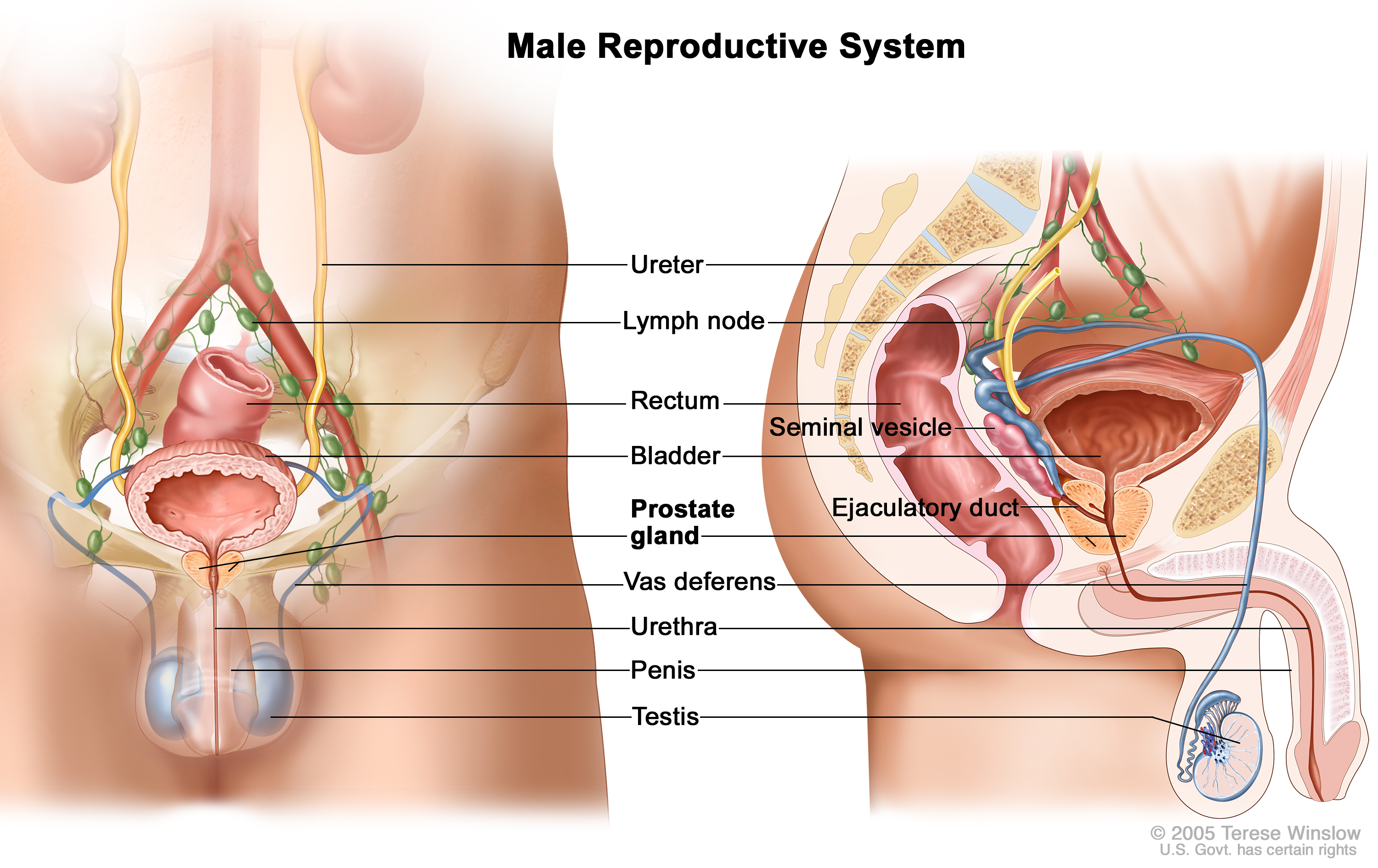 Reproductive System Patient Siteman Cancer Center
